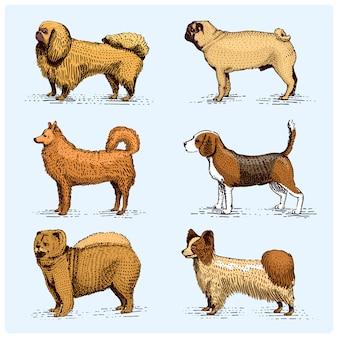 犬の品種が刻まれた、木版画ったらスタイル、ビンテージ描画種の手描きイラスト。パグとセッター、スピッツとプードル、スプリンガースパニエルウィペットハウンドドーベルマン、羊飼い。