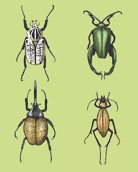 Большой набор насекомых-жуков-жуков и пчел многих видов в старинном стиле рисованной гравюры на дереве