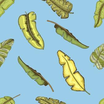 ヴィンテージの熱帯、エキゾチックな葉と刻まれたシームレスパターンバナナやし、手描きスタイル