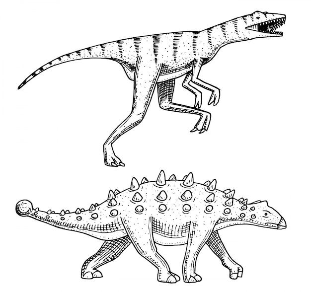 恐竜アンキロサウルス、タラルルス、ヴェロキラプトル、ユーオプロケファルス、サルタサウルス、スケルトン、化石。先史時代の爬虫類、刻印された動物手描き。
