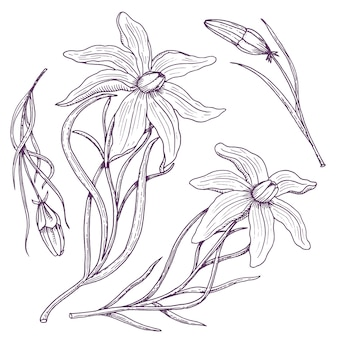 Лилия с листьями и бутонами. свадебные цветы в саду или весеннем растении.