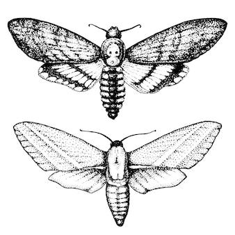Тату или бохо футболка или скрапбукинг. мистический эзотерический символ свободы и путешествий. бабочка или насекомое эскиз. энтомологическая коллекция. гравированные рисованной в старом эскизе и винтажном стиле