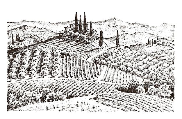 素朴なブドウ畑。家と田園風景。太陽のトスカーナの背景。フィールドとヒノキの木。収穫と干し草。刻まれた手は、古いスケッチとラベルのビンテージスタイルで描画されます。