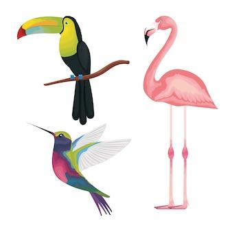 トロピカルとエキゾチックな鳥