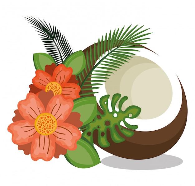 アイコンココナッツデザイン
