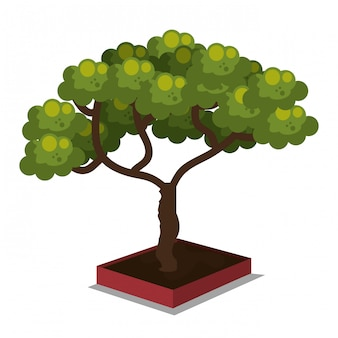 等尺性の木