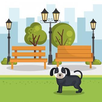 公園のシーンでかわいい犬