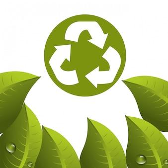 Листья и листья экология графика