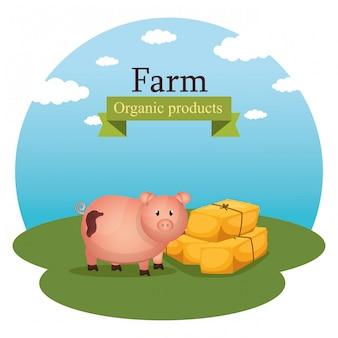 農場のシーンで豚