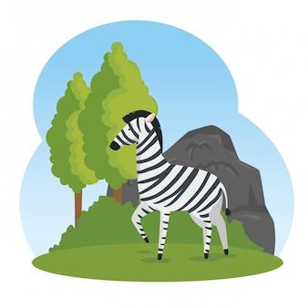 Милый зебра диких животных заповедник