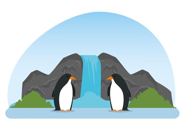 Пингвины диких животных в водопаде заповедника