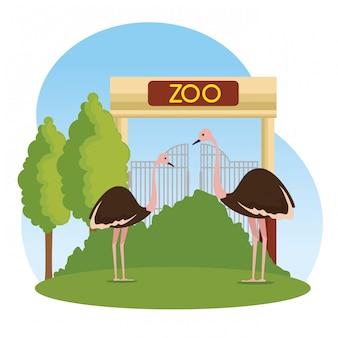 動物園保護区のダチョウの野生動物