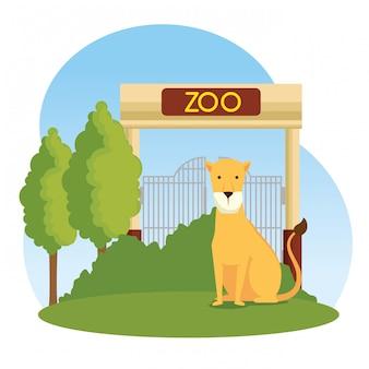 動物園保護区のライオン野生動物