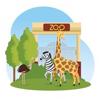 動物園のシマウマとキリンの野生動物とダチョウ