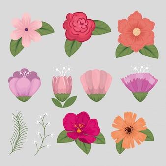 自然の花びらと葉と花のセット