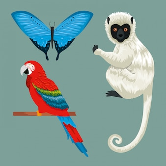 オウムとキツネザルと熱帯の蝶を設定します