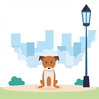 公園でかわいい犬