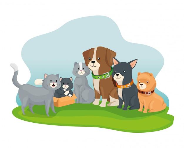小さな犬と猫のグループ
