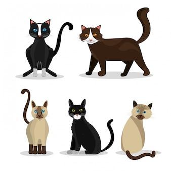ペットの猫のデザイン。
