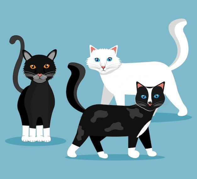 Домашний кот дизайн.