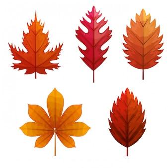 Набор осенних листьев