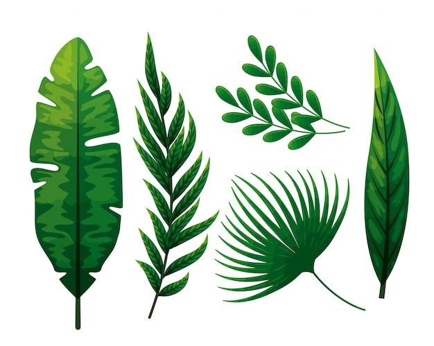 Набор тропических листьев