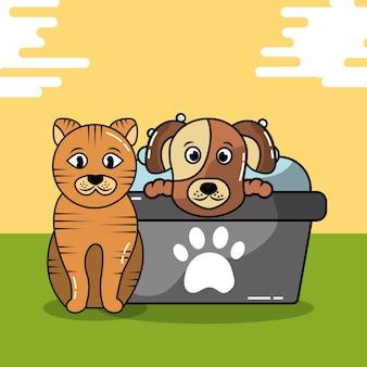 Домашнее животное кошка и шампунь для ухода за собакой