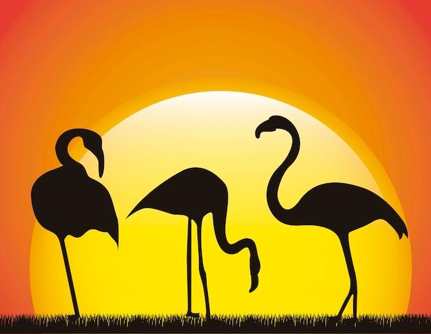 フラミンゴ、風景、背景、動物