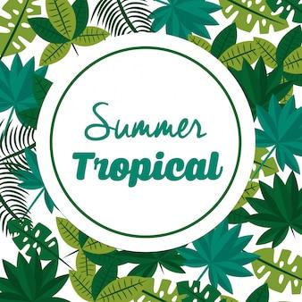 夏の熱帯の季節