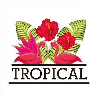 熱帯の花葉動物カード