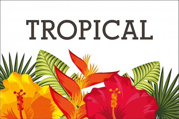 熱帯の花葉カード