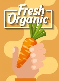 Рука, держащая овощную свежую органическую морковь