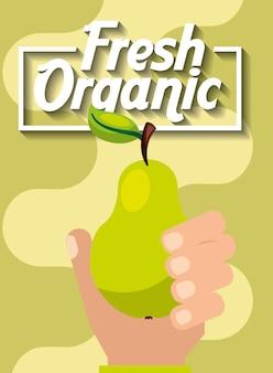 新鮮な有機フルーツ梨を持っている手
