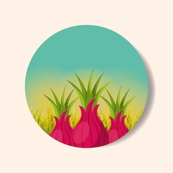 プランテーション野菜収穫玉ねぎ