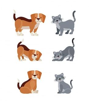 Домашнее животное и ветеринария