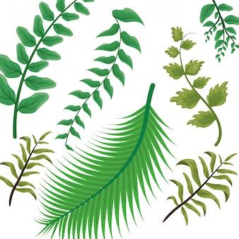 Тропические зеленые листья на белом