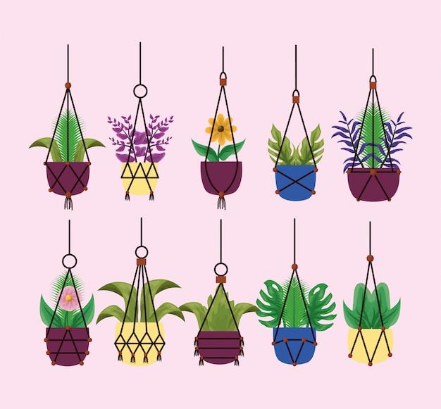 鉢ベクトル内の分離ぶら下げ観葉植物