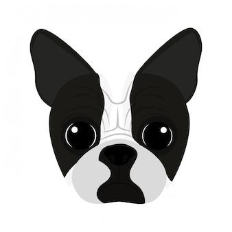 かわいい犬の顔