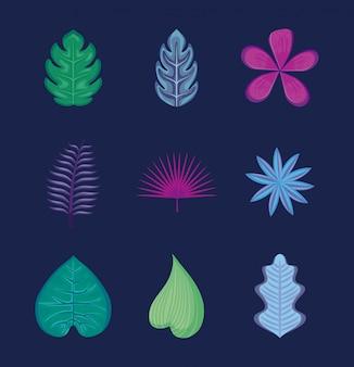 熱帯の葉と花のセット