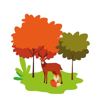 自然のキツネと鹿哺乳類動物