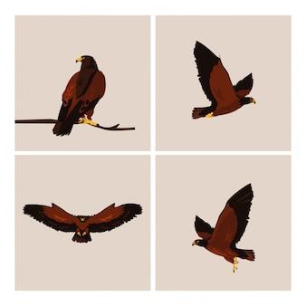 さまざまなポーズで鷹の鳥を課す