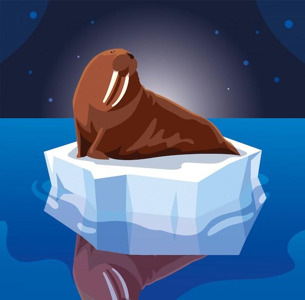 流氷に漂うセイウチ