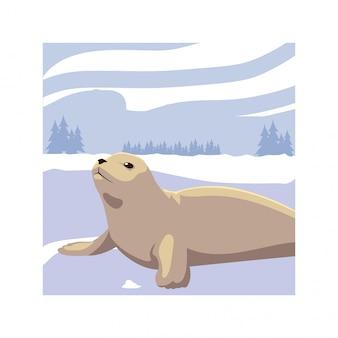 北極のシール