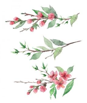 Акварель рисованной цветущие вишневые бранчи с цветами и листьями