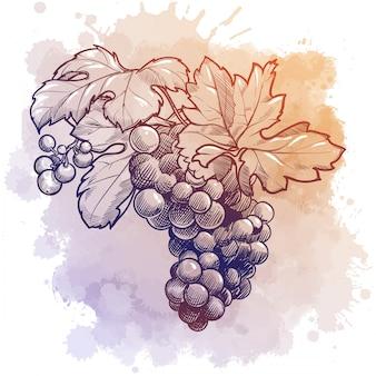 葉とブドウのクラスター。水彩テクスチャに分離された線形描画