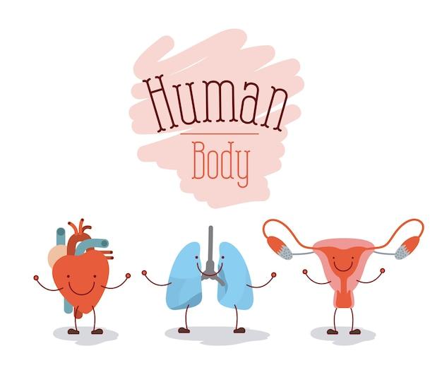 人体システム