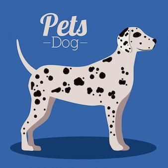 Дизайн домашних животных