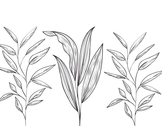 Узор растения и травы, изолированных значок