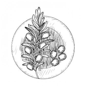オリーブの花の描画分離アイコン