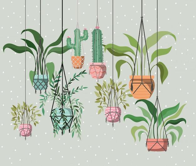 Комнатные растения в вешалках макраме